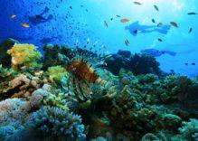 Buceo en el Mar Rojo – crucero ruta norte