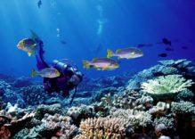 Buceo en Maldivas – ruta 5 atolones clásica