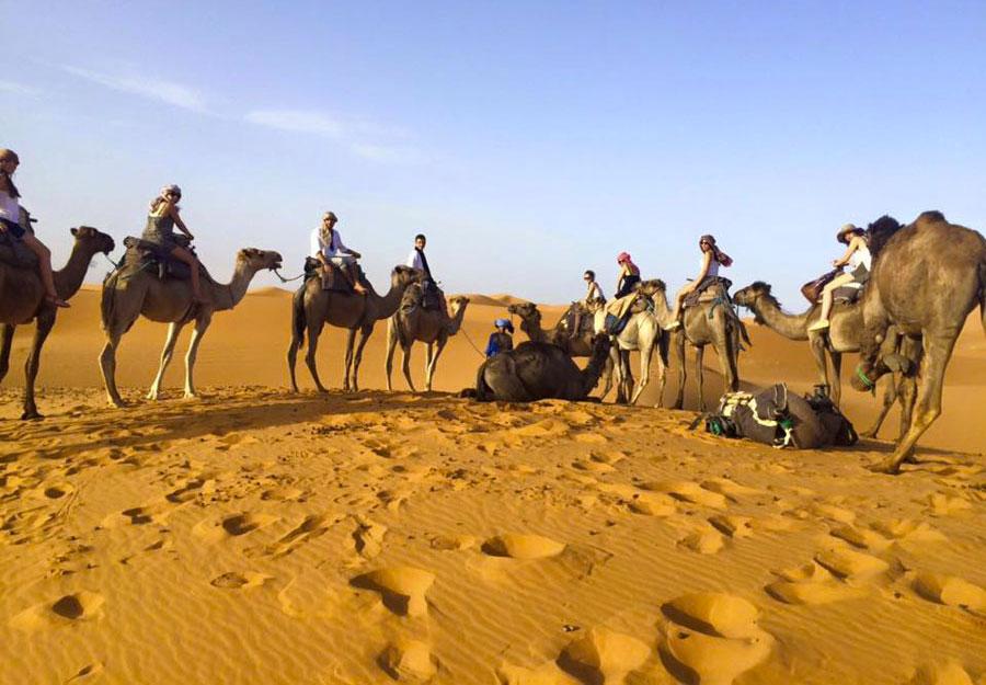 Paseo por el desierto en camello